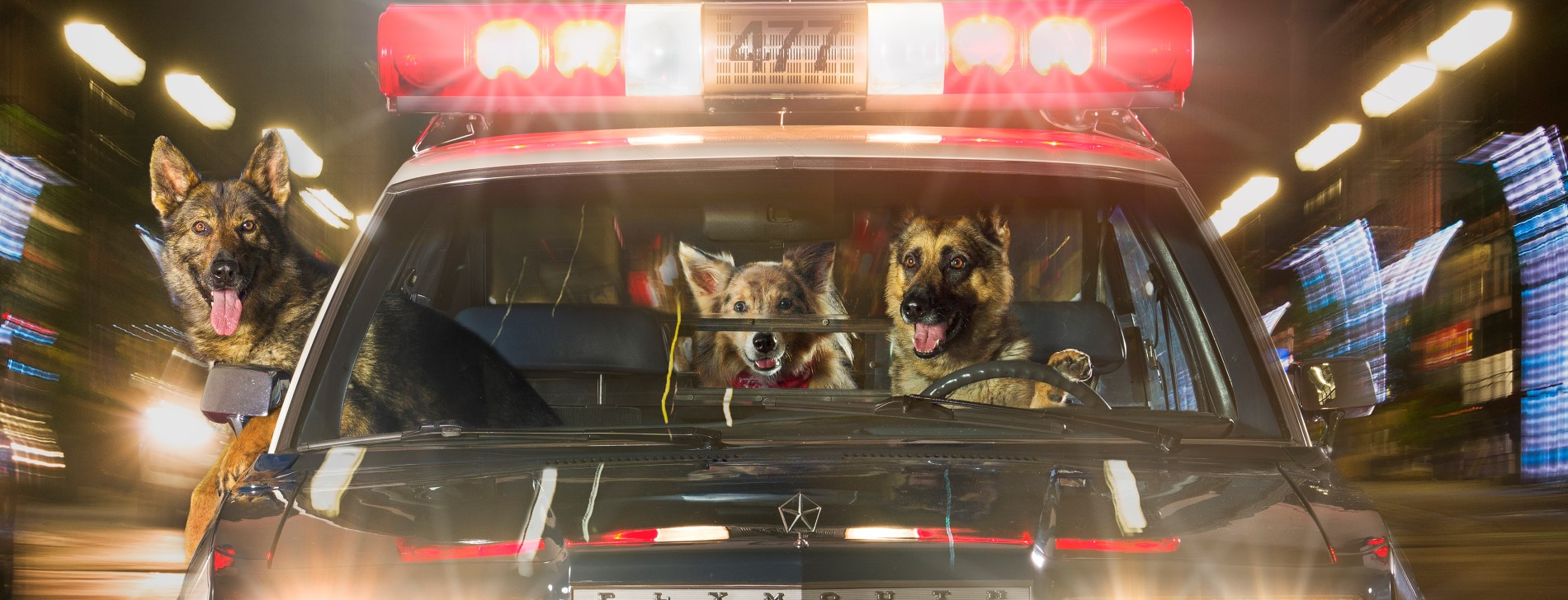 Canines driving police cruiser